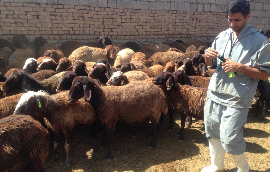 مدیر جهاد کشاورزی شهرستان فیروزکوه