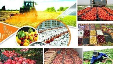 کشاورزی فیروزکوه